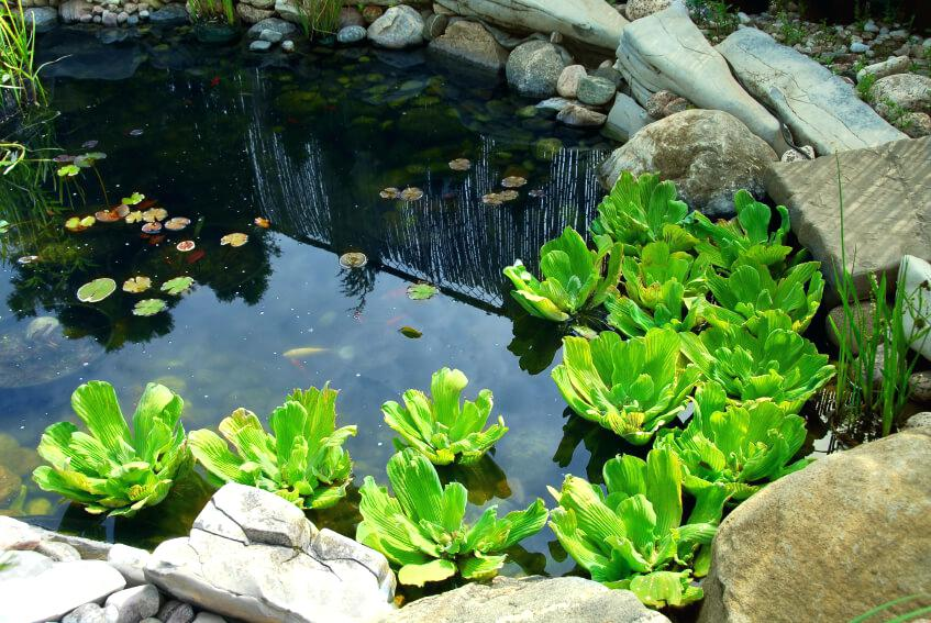 small-fish-ponds-a-tranquil-backyard-pond-with-a-few-small-ornamental-fish-lily-pads-reeds-small-fish-ponds-with-waterfalls.jpg